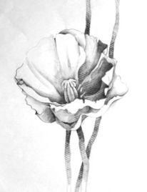 Grafik, Blumen, Mohn, Skizze