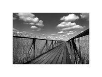 Holz, Landschaft, Moorlandschaft, Fotografie