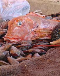 Fotografie, Fisch, Frankreich, Meer