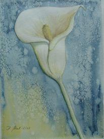 Blüte, Calla, Natur, Aquarellmalerei