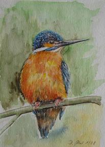 Vogel, Wald, Aquarellmalerei, Eisvogel