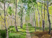 Wald, Weg, Birken, Frühling