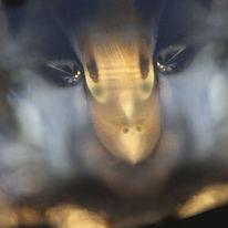Fotografie, Trauer, Blau, Glas