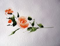 Aquarell, Rose