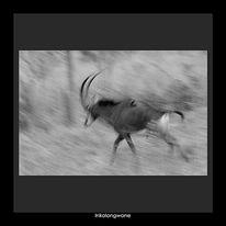 Tiere, Main, Afrika, Fotografie