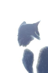 Rhein, Katze, Schwarz weiß, Tiere