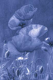 Blüte, Nastätten, Blau, Natur