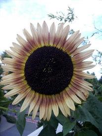 Sonne, Blumen, Spiel, Fotografie