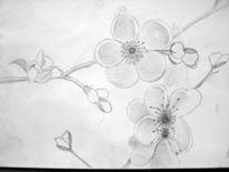 Blüte, Zeichnung, Bleistiftzeichnung, Landschaft