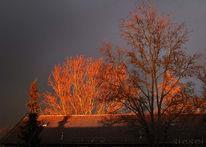 Baum, Münhen, Sonnenuntergang, Fotografie