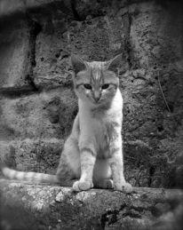 Mauer, Fotografie, Katze, Tiere