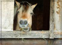 Pferde, Neugier, Hunger, Aufmerksamkeit