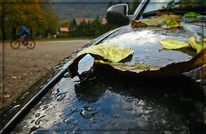Auto, Fotografie, Sutten, Blätter