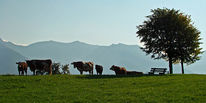 Berge, Suche, Fotografie, Tourismus