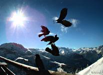 Dolen, Berchtegaden, Flugkunst, Akrobatik