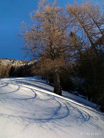 Schatten, Leben, Schnee, Alter