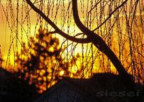 Fotografie, Küchenblick, Weide, Sonnenuntergang