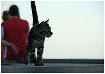 Katze, Meer, Seitenblick, Aufmerksamkeit