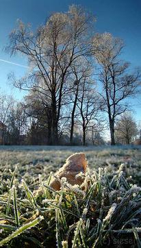 Halm, Gras, Farne, München