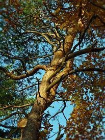 Hoffnung, Wald, Farben, Leben