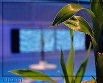 Bmw, Pflanzen, Farben, Fotografie