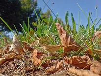 Herbst, Laub, Vorbote, Gras
