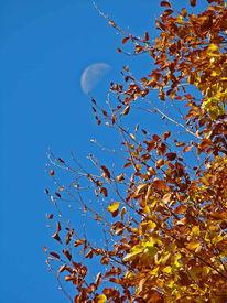 Reiseimpressionen, Herbst, Mond, Blätter