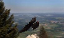 Überflug, Brauneck, Berge