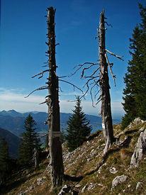 Fotografie, Baum, Tod, Himmel