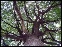 Natur, Stamm, Baum, Pflanzen