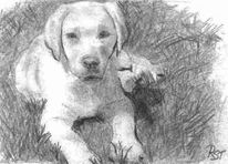 Hund, Welpe, Bleistiftzeichnung, Tierportrait