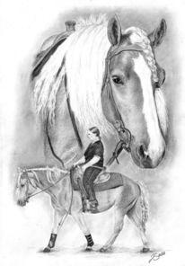 Haflinger, Pferde, Western, Pony