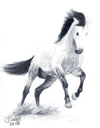 Pferde, Hengst, Andalusier, Zeichnungen