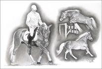 Haflinger, Portrait, Pony, Hengst