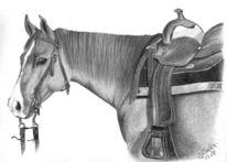 Pferde, Western, Viertel, Stute