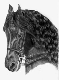 Portrait, Hengst, Zeichnung, Pferde