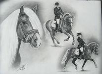 Hengst, Pferde, Pony, Haflinger