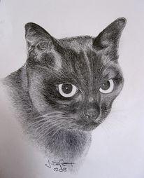 Katze, Zeichnung, Portrait, Mieze