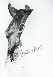Quarterhorse, Wallach, Zeichnung, Pferde