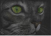Katze, Tierportrait, Augen, Katzenaugen
