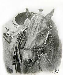 Westernsattel, Viertel, Pferde, Quarterhorse