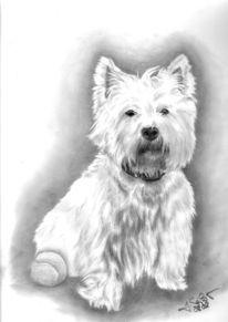 Westhighland, Westi, Hund, Zeichnung