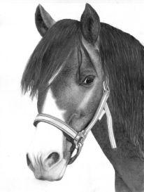 Portrait, Pferde, Pony, Zeichnungen