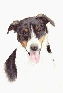 Rüde, Hund, Russel, Zeichnungen