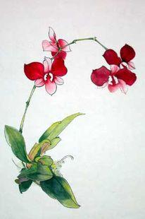 Malerei, Orchidee, Tuschezeichnung, Blüte