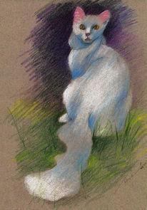 Zeichnung, Katze, Zeichnungen