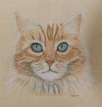 Katze, Pastellmalerei, Portrait, Kreide