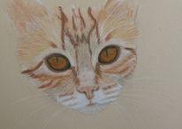 Katze, Tiere, Portrait, Natur