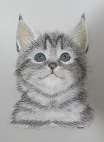 Portrait, Katze, Pastellmalerei, Kreide