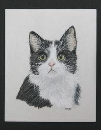 Kreide, Tiere, Portrait, Natur